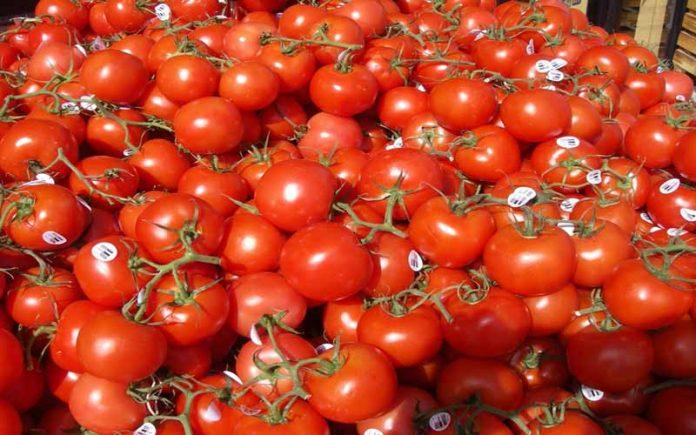 Iraq plans to export tomato and potato