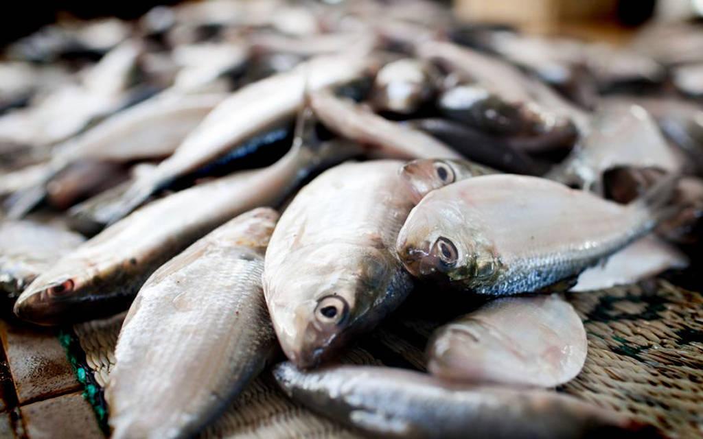 76.8 مليون ريال حصيلة الصيد الحرفي في عُمان بنهاية فبراير
