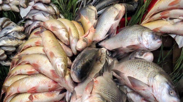 Iran exports fish to Iraq worth 25 million dollars