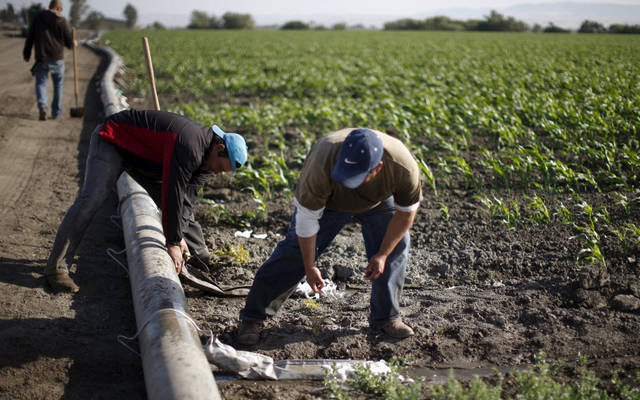 56 million dinars, the annual profits of the Kuwaiti agricultural sector, down 2.3%