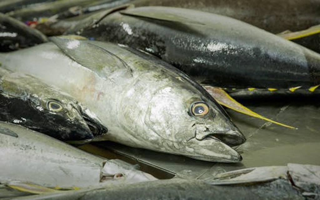 المبيعات يعمق خسائر الأسماك العُمانية النصف سنوية