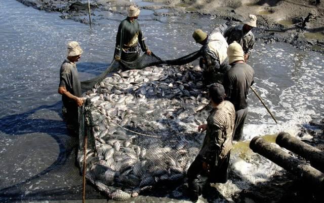 الكويت تنتج 2000 طن من الأسماك الاقتصادية يونيو 2020