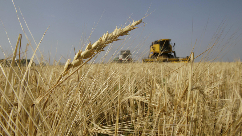 Iraq is achieving a leap in wheat production
