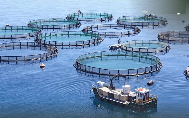Iraqi Agriculture: Production of a vaccine to protect fish farming fields in the governorates