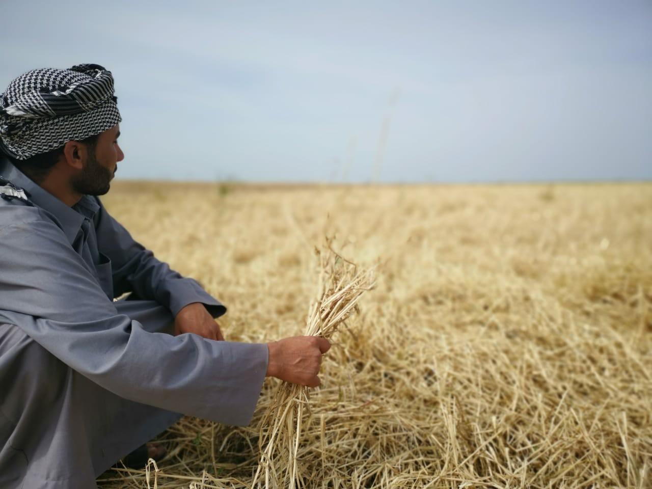 العراق سيواجه أزمة النفط بمنتجاته المحلية وقريبا سنصّدر 750 ألف طن من الشعير