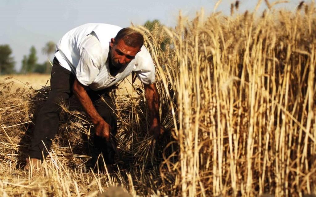 لعدم كفاية المياه.. العراق يخفّض المساحات الزراعية بنسبة 50%