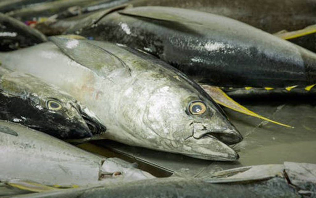الزراعة العُمانية تسعى للتوازن بين تسويق وتصدير المنتجات السمكية